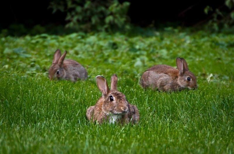 Косят зайцы траву mp3 скачать
