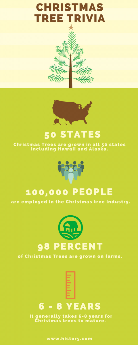 christmas tree facts Learn some helpful information about choosing your holiday tree.