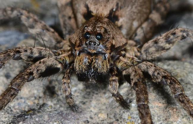 в казахстане какие пауки водятся фото тогда