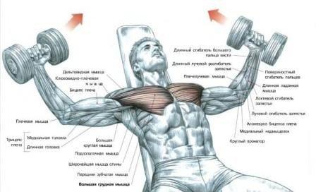 Упражнения на грудные мышцы для мужчин в домашних условиях 54