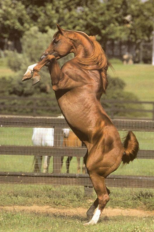 Лошадь и её мир.