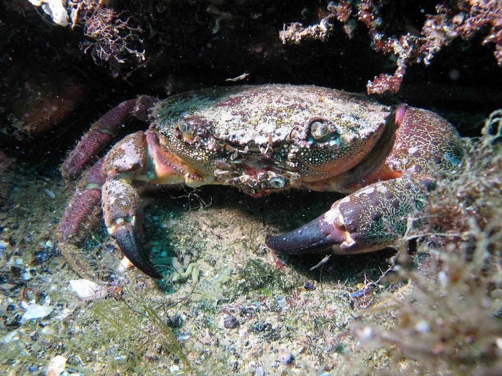 морские обитатели черного моря картинки изгали говорит, что