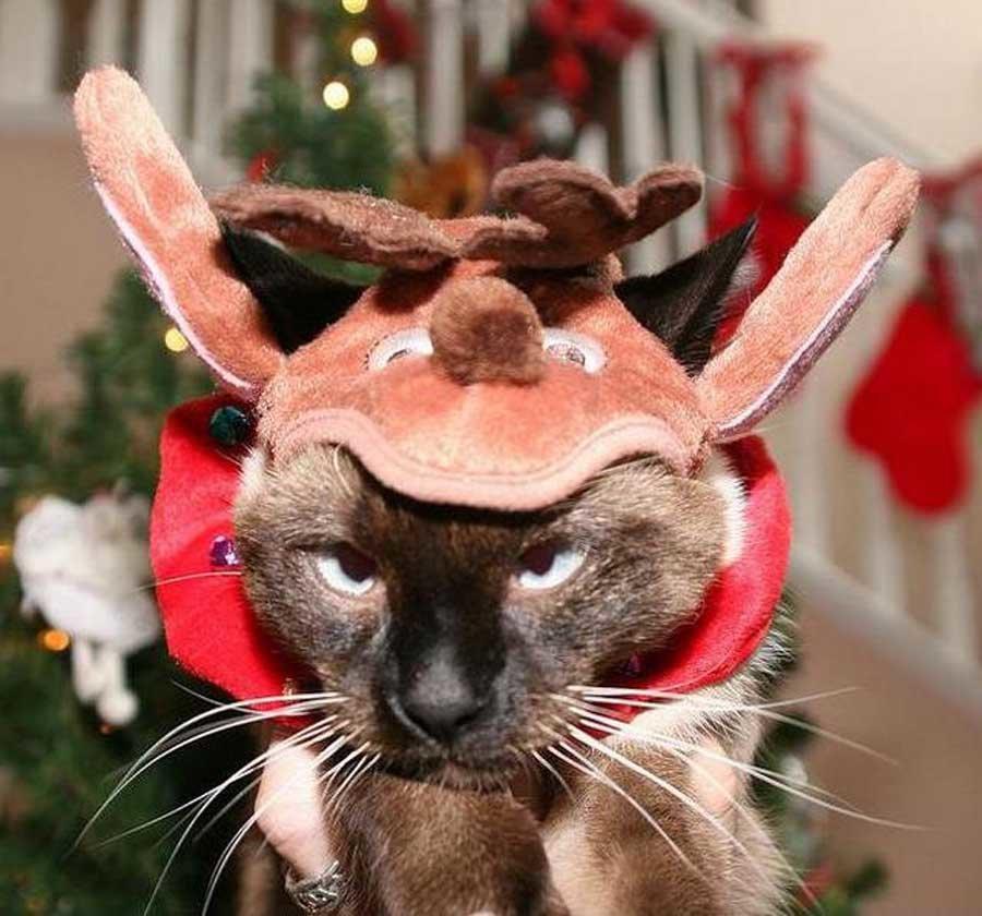 долгий смешные новогодние фотографии животных только всевозможные