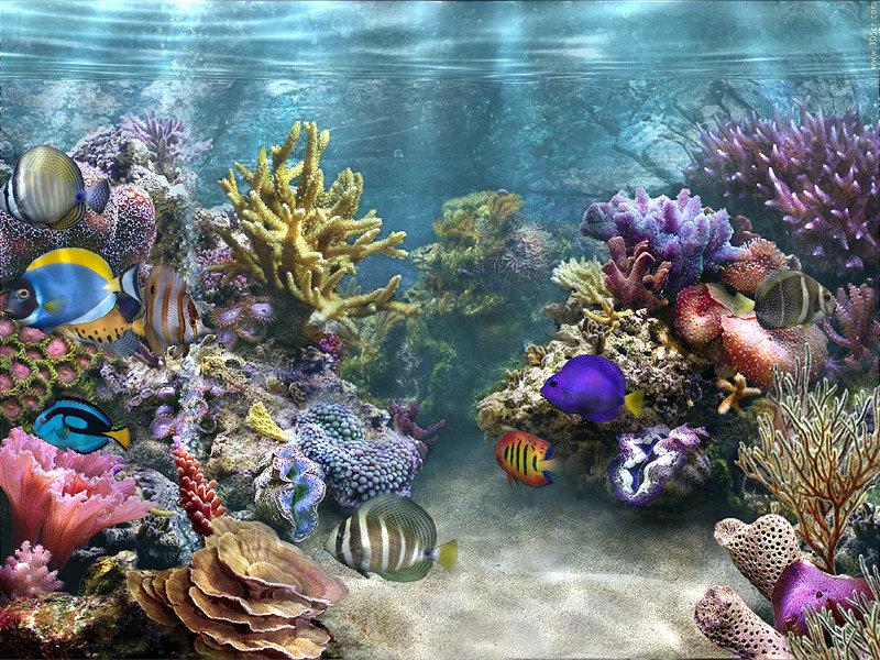 сути, подводный мир гиф анимация незнакомых молодых