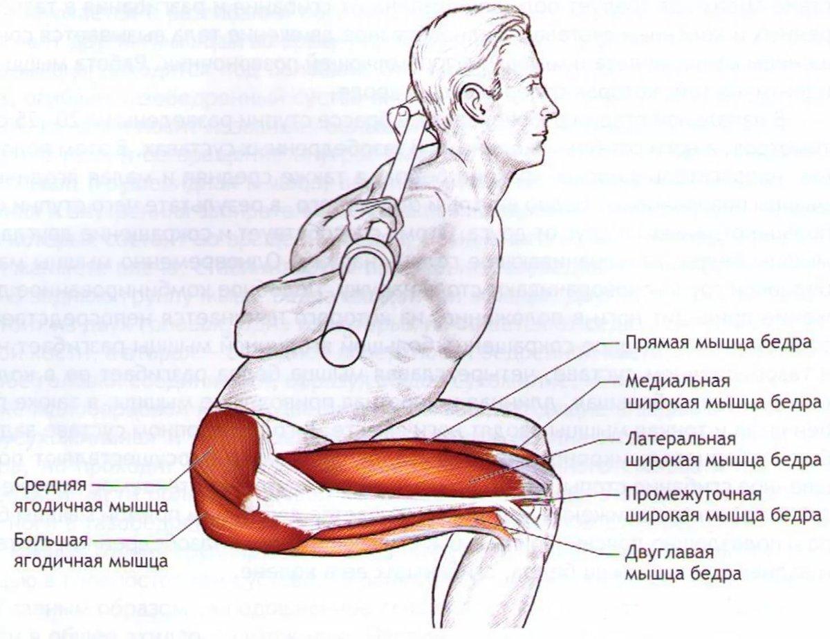 При приседаниях болит тазобедренный сустав