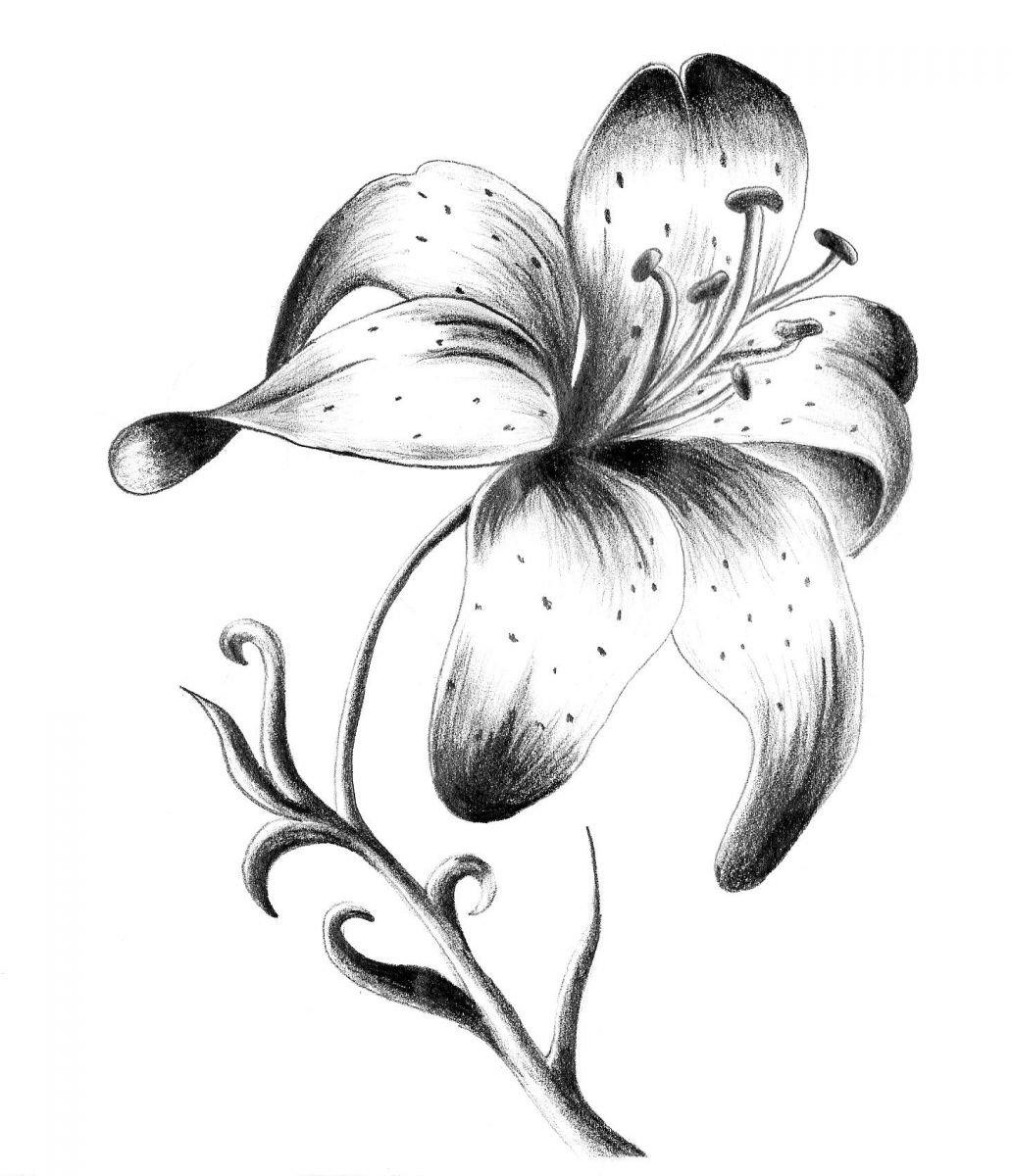 Картинки лилии черно-белые