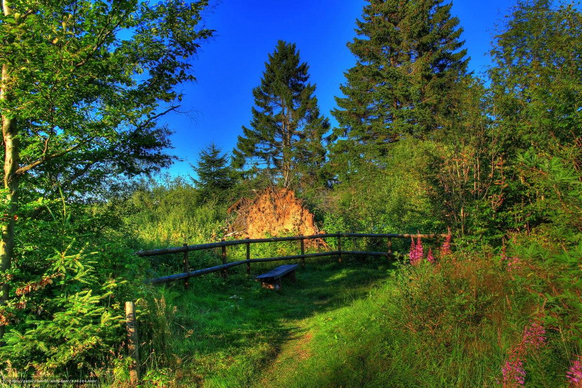 Прелести лета- незабываемый пейзаж