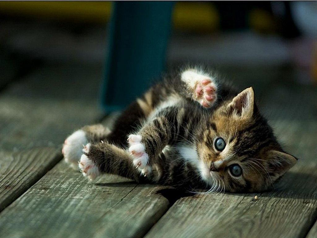 Днем, милые картинки котят с надписями