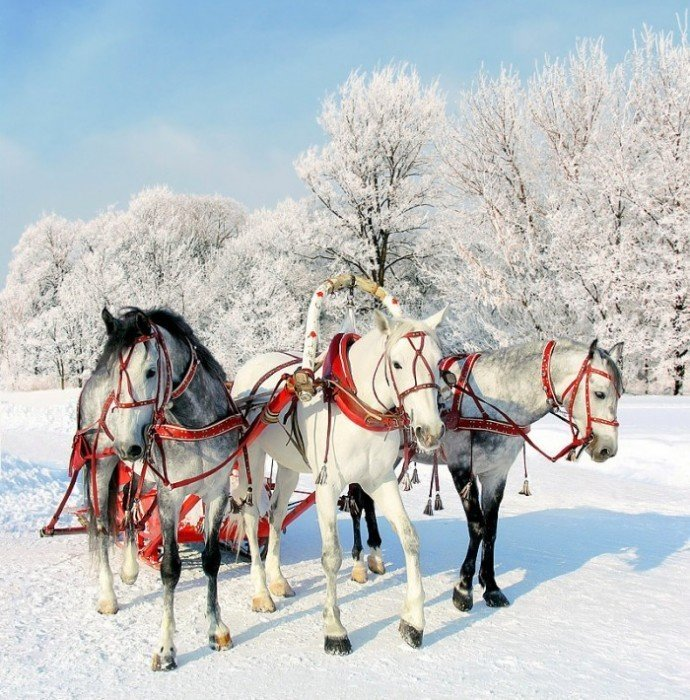 Тройка лошадей с бубенцами
