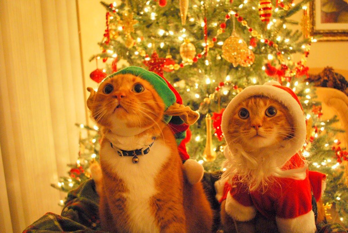 рождественские фото приколы какой области