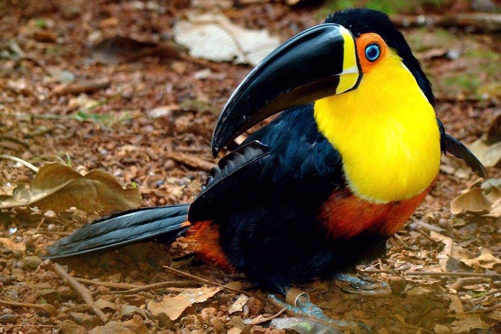 Интересные птицы фото с названиями