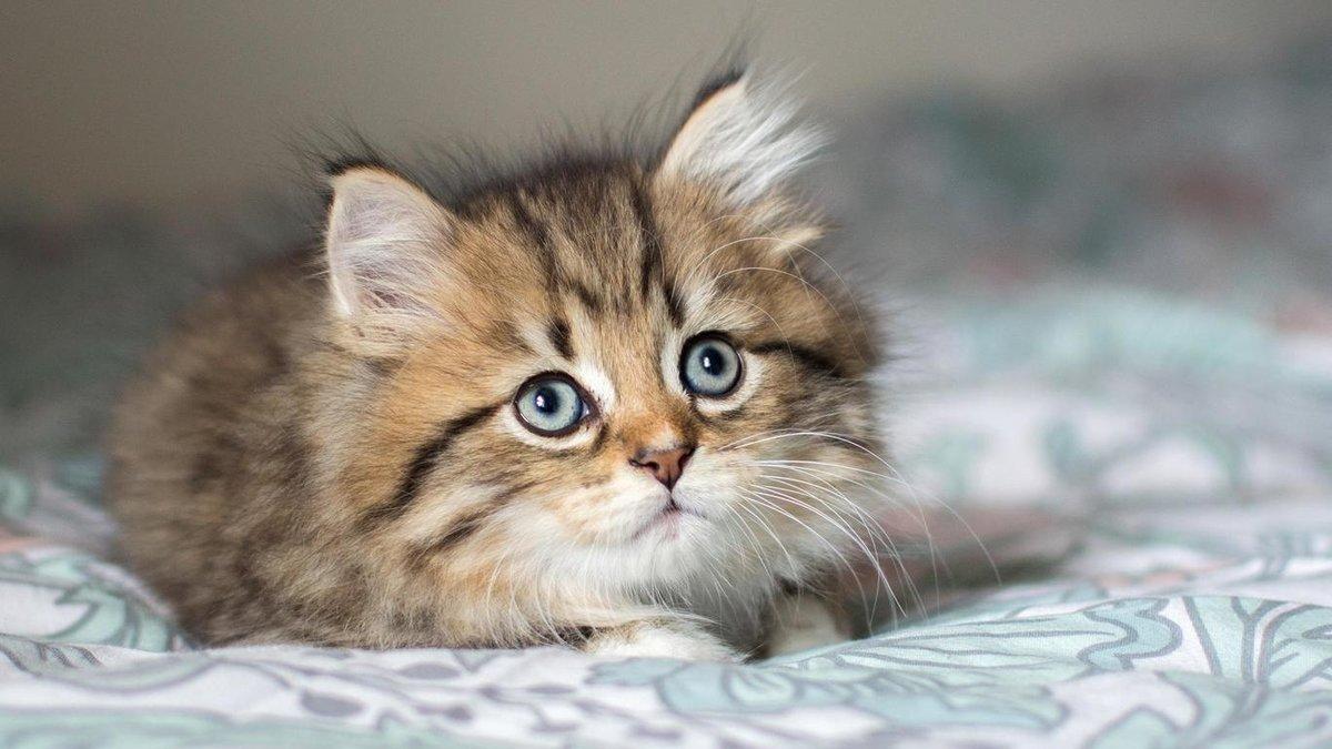 Открытки приездом, веселые картинки с котятами