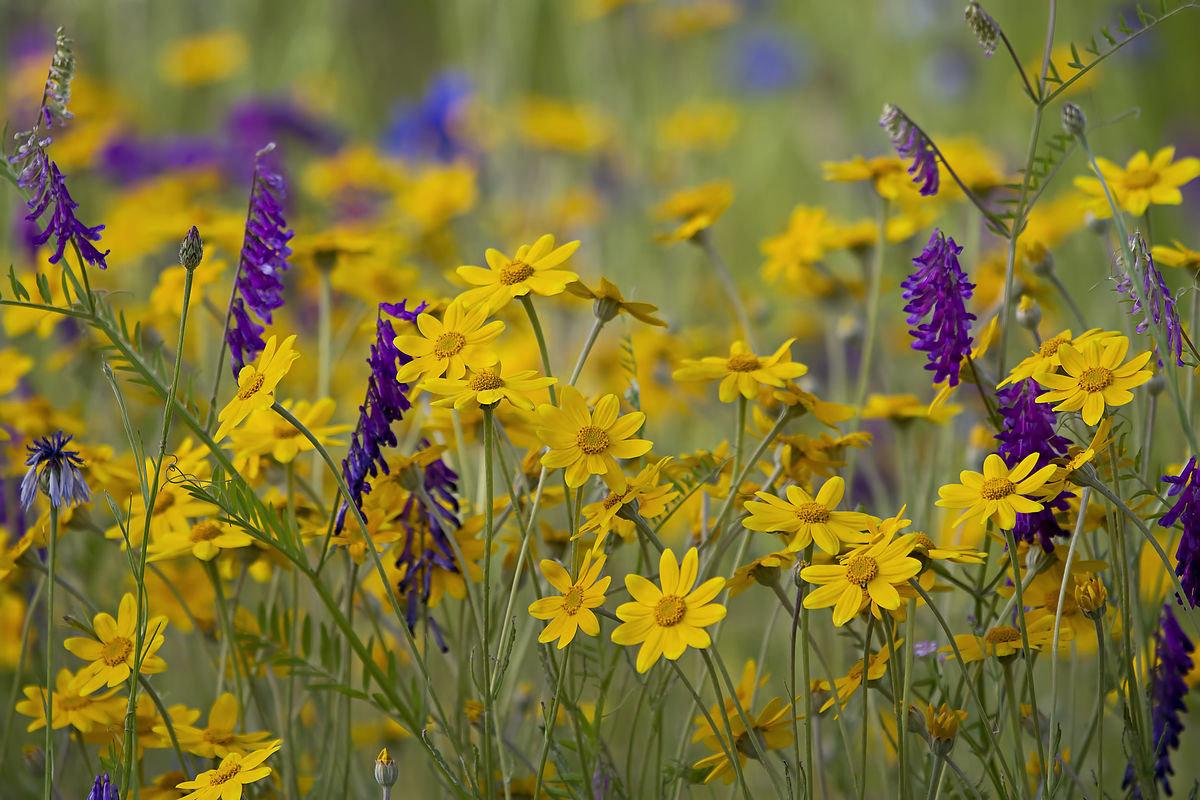 Полевые цветы россии фото, роспись букеты