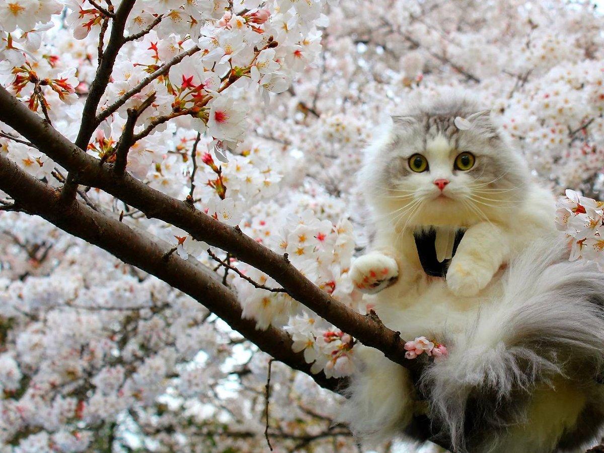 Весна. смешные картинки, бабушке