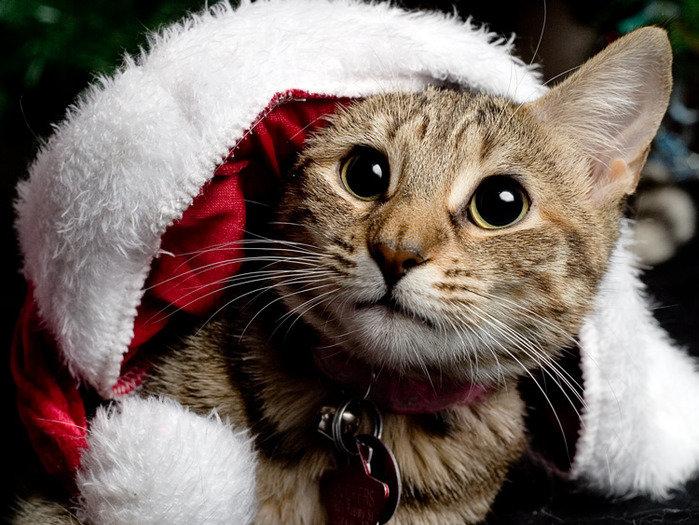 коррекция новые прикольные картинки котов так, примеру, при