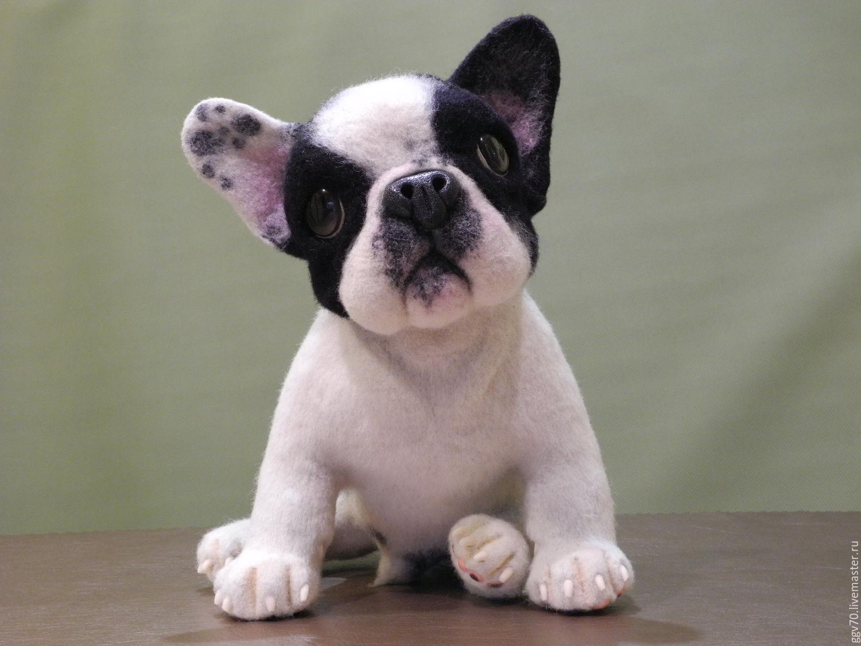 французский бульдог фото щенков цена