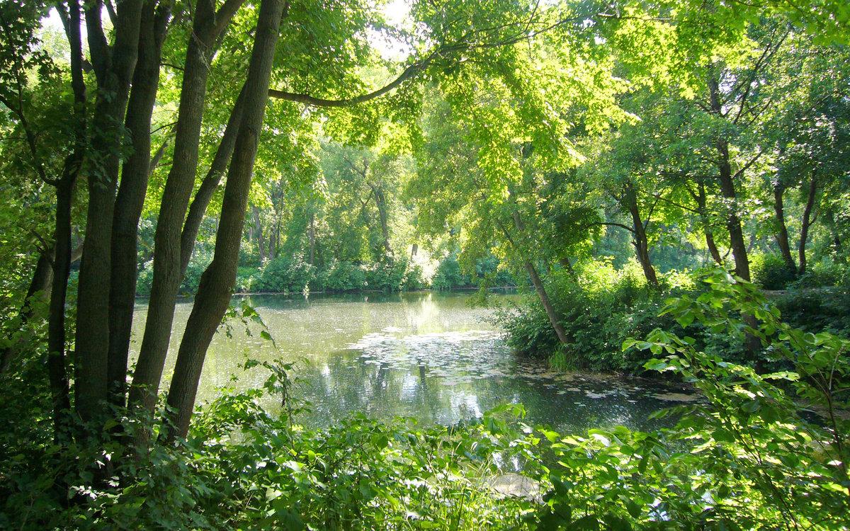 Живописный вид реки