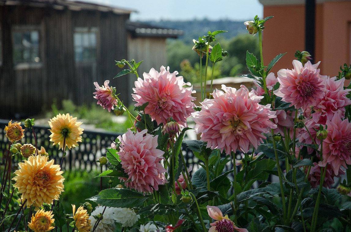 цветы цветущие в августе фото осины начинают