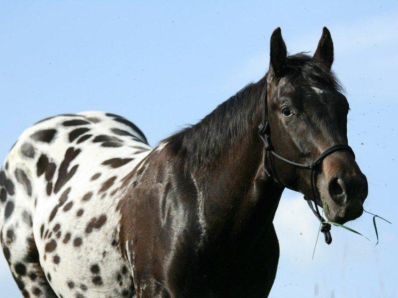 Картинки пород лошадей с надписями, доброе утро
