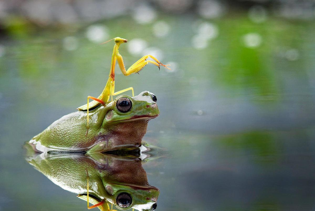 Сделать открытку, лягушки и жабы прикольные картинки