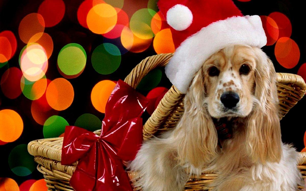 Открытка животные и новый год