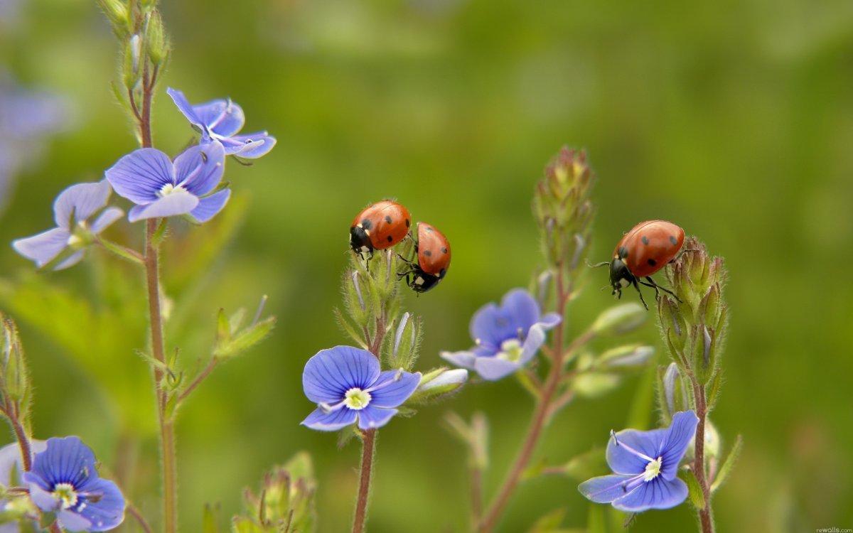 Фото летние цветы в природе 53