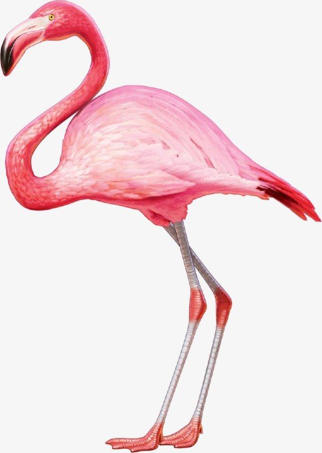 Картинки для детей розовый