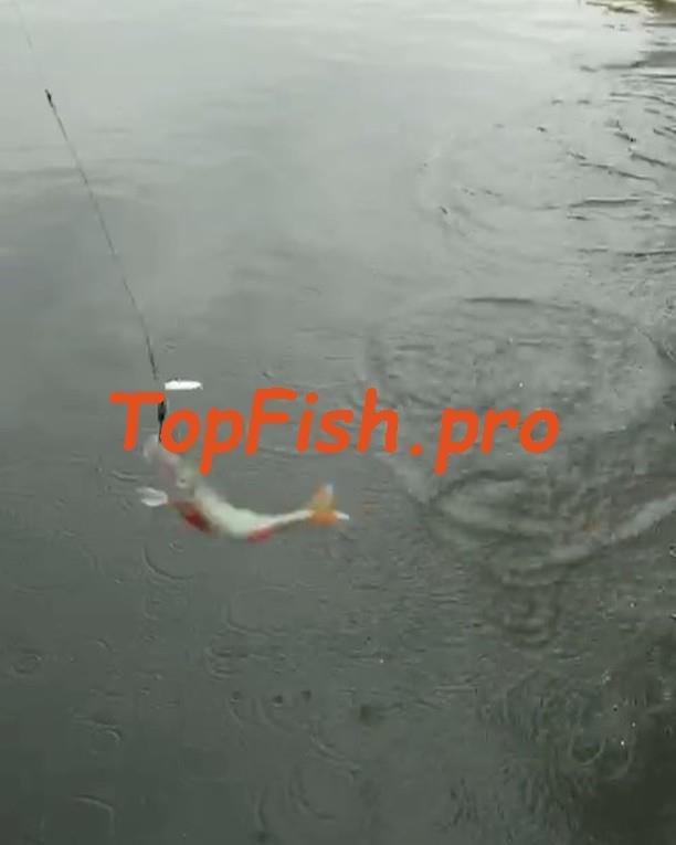 Ниже вы можете видеть прогноз клева рыбы для окрестностей ...