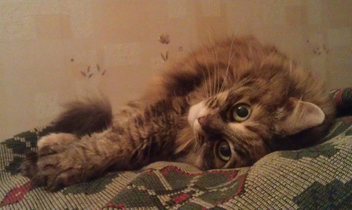 Милка#кошка