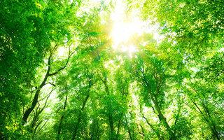 Картинки лето на рабочий стол, обои на рабочий стол лето » Страница #2 природа, лето, дерево, солнце