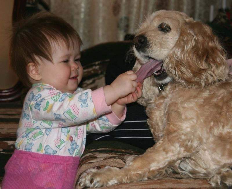 Спокойной ночи, картинки дети и собаки смешные
