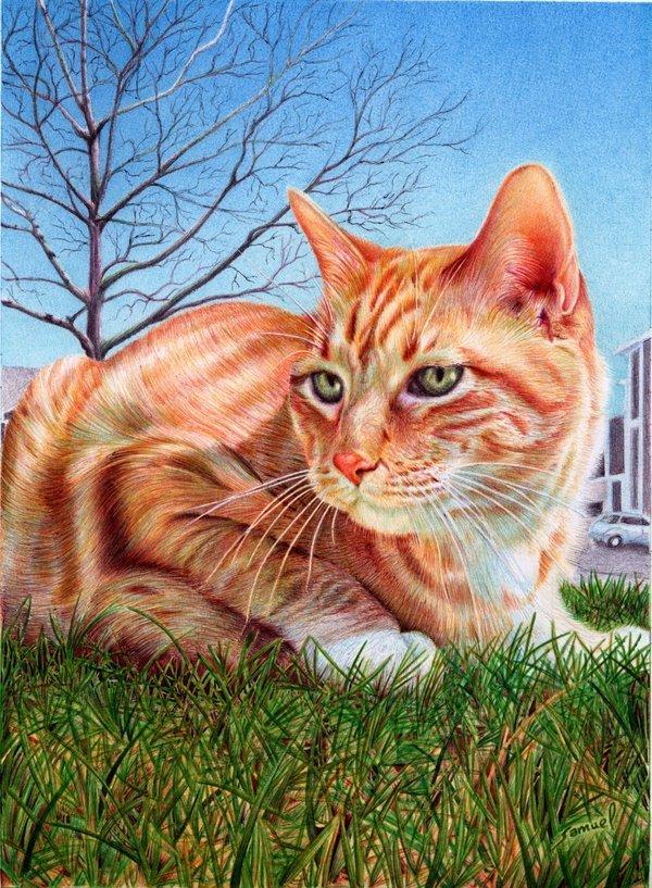 Поздравление днем, рыжий кот картинки нарисованные