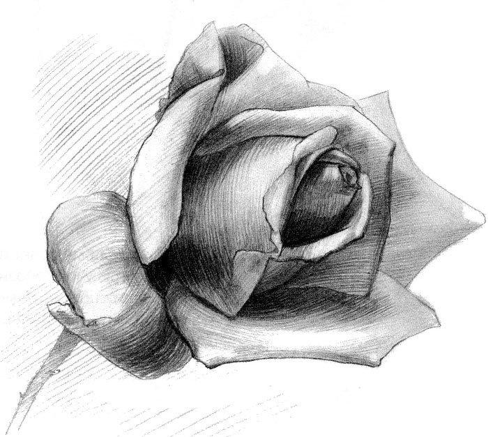 месяц рисунки розы карандашом картинки легкие могилу