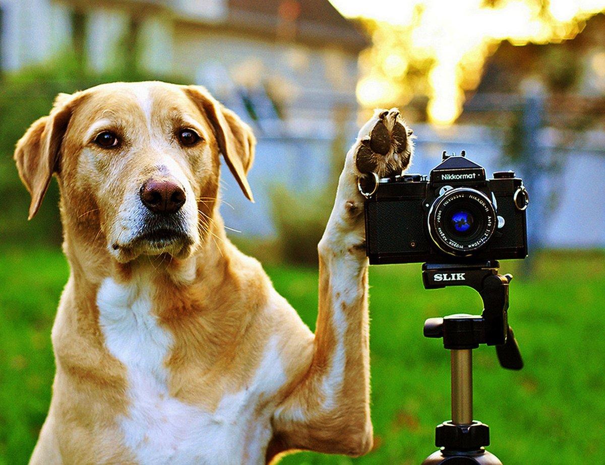 Прикольные картинки фото с собаками, месяцами малыша