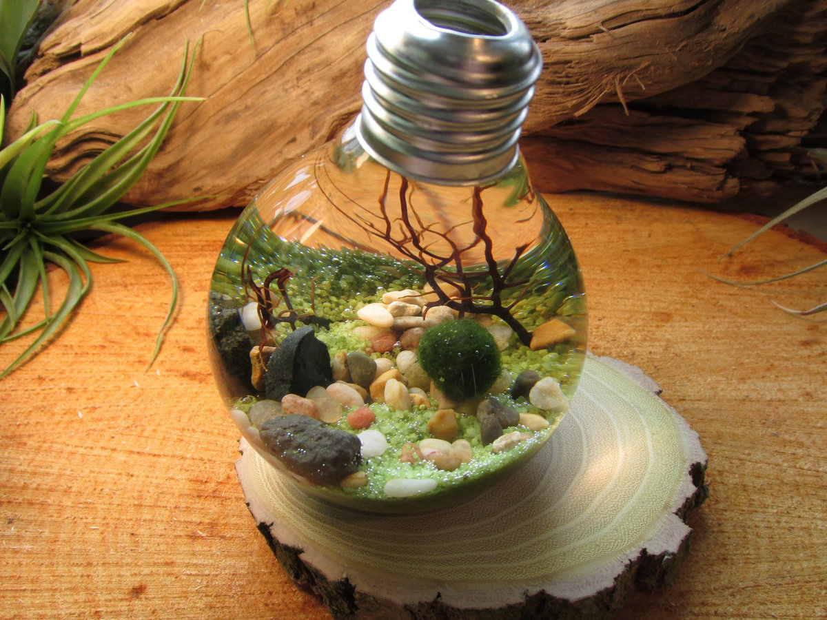 Аквариум из лампочки своими руками 391