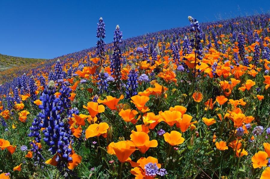 Летняя роспись полей с насышенной палитрой красок