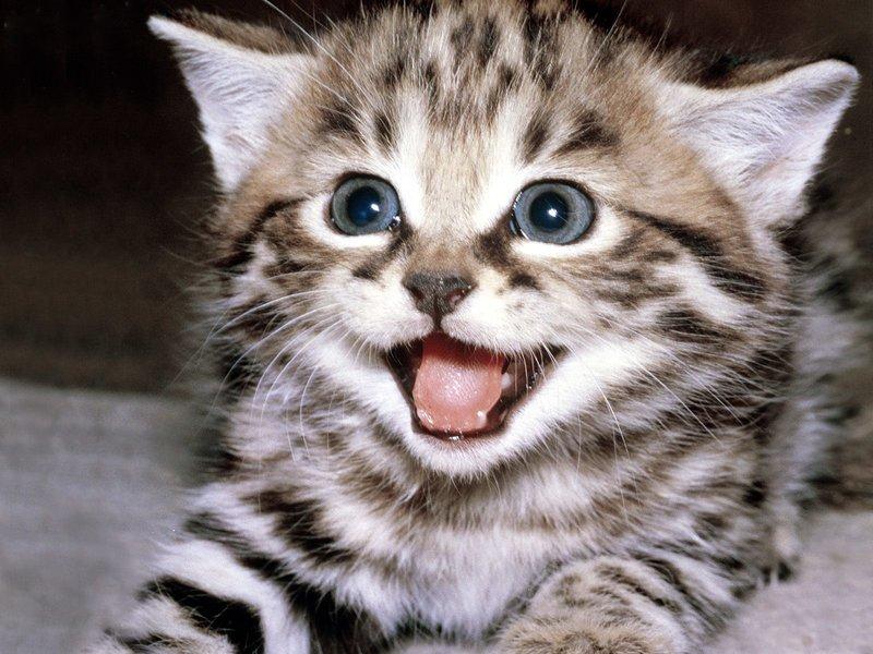 фото полосатый котенок
