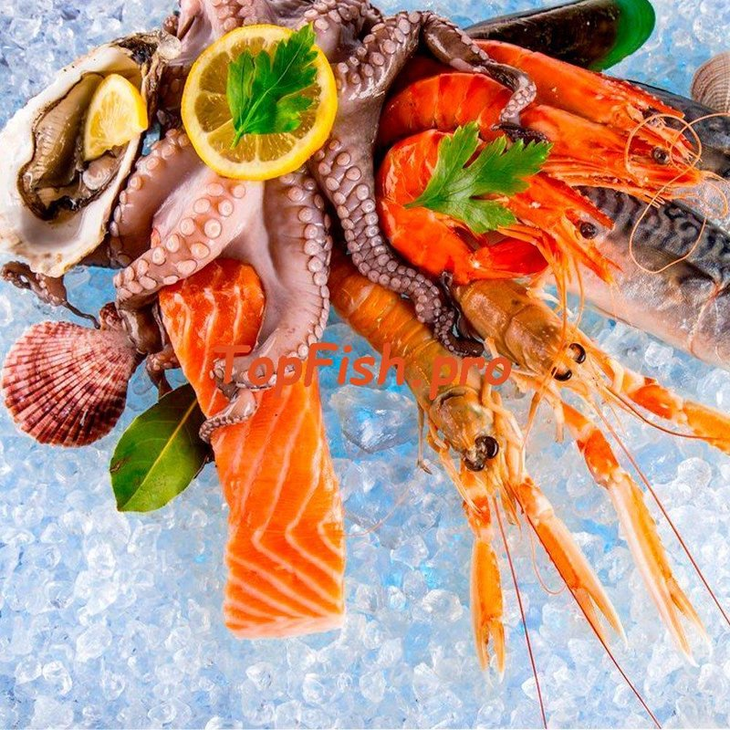 Активатор клёва fishhungry официальный сайт
