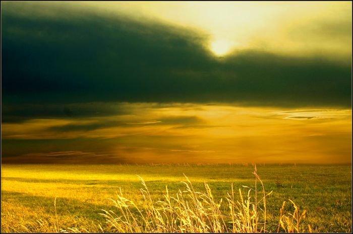 Красивые фотографии полей