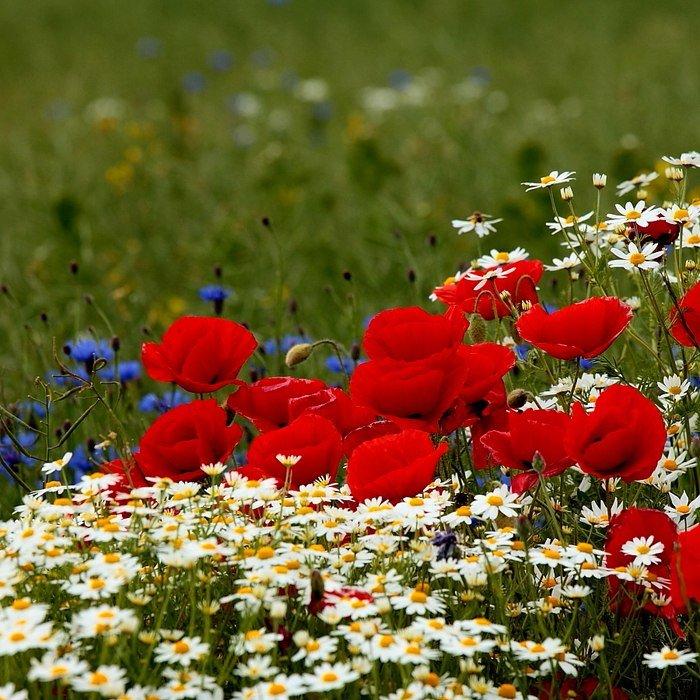 Июня день, картинки с анимацией лето цветы