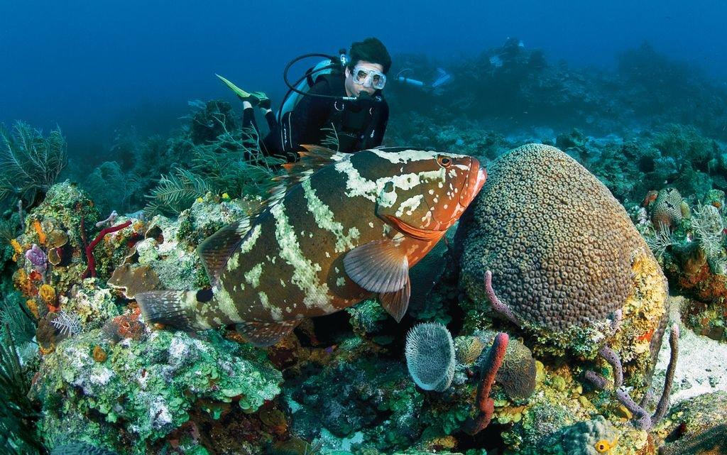 Подводные обитатели хорватии список и фото