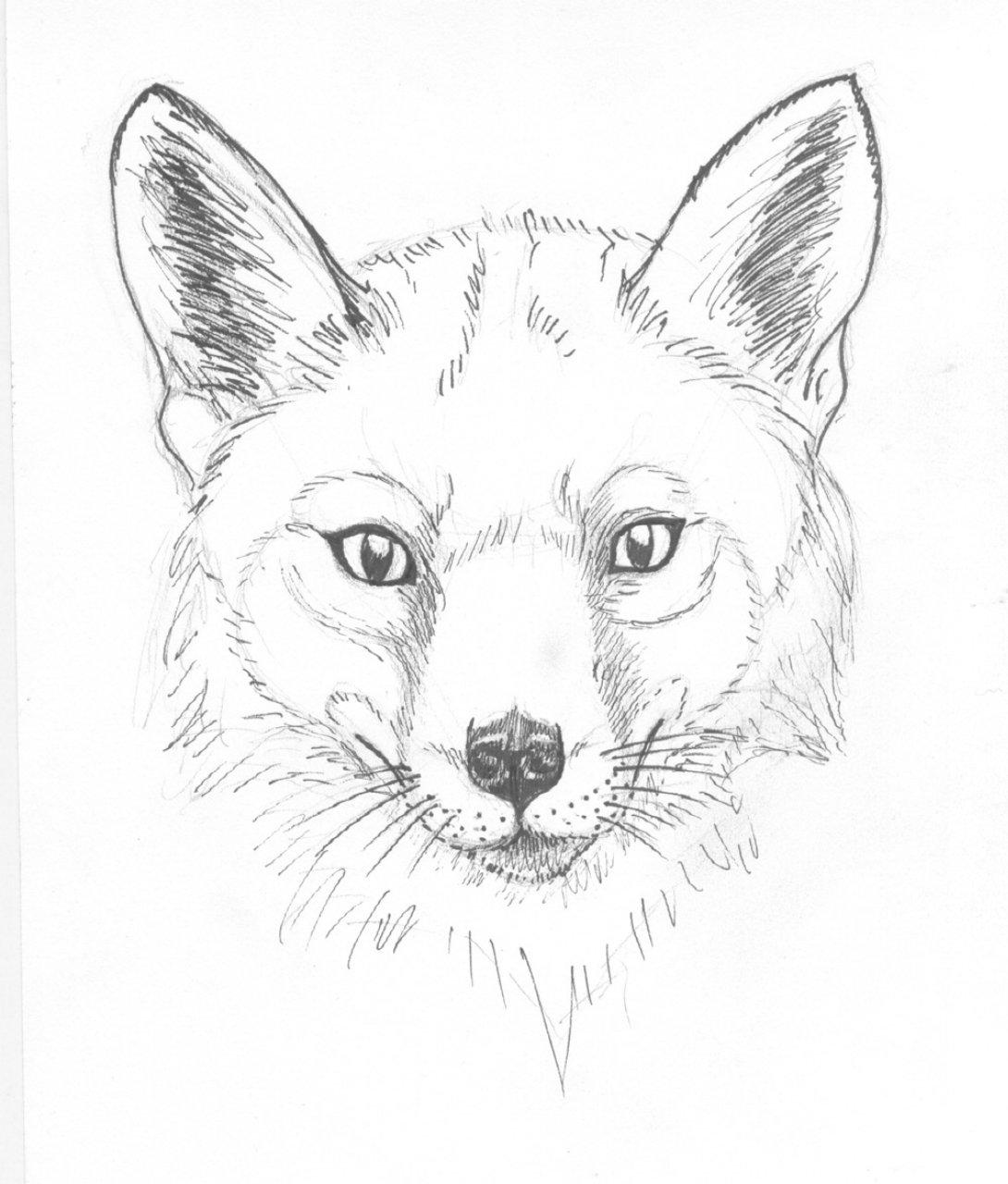 Картинки для начинающих карандашом животных