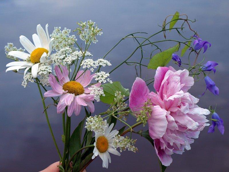 загадочная полевые цветы фото любимой девушка корит себя