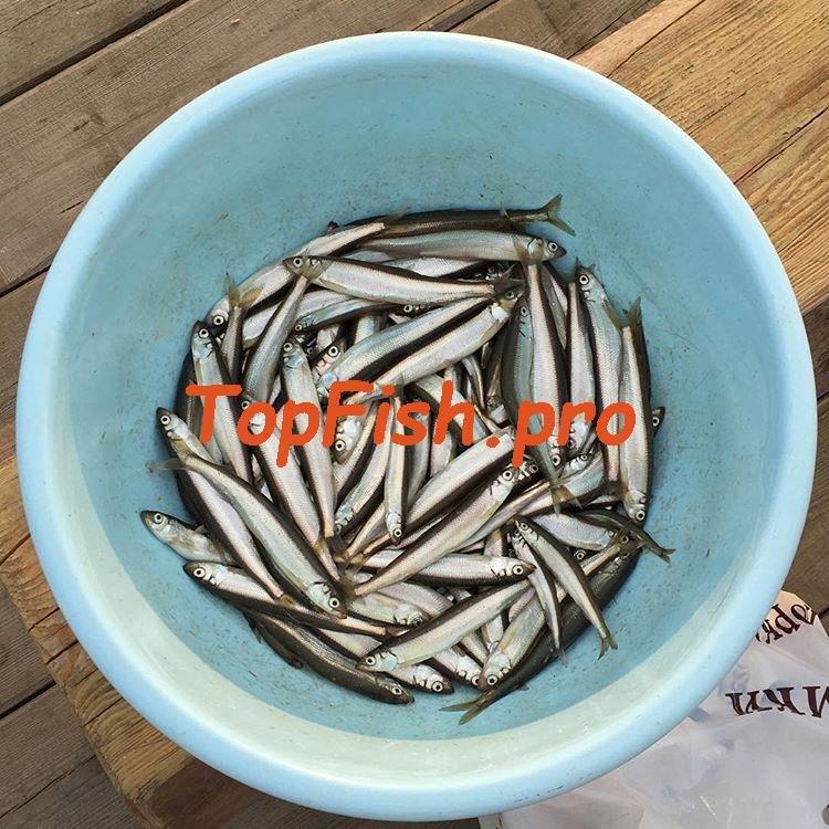 активаторы клева рыбы своими руками зимой
