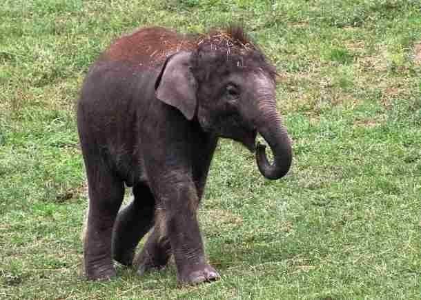 Слоненок. Симпатичный слоненок