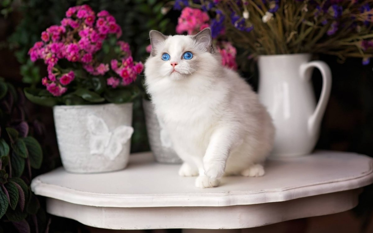 фотографы картинка красивой белой кошки в цветах они заставлены