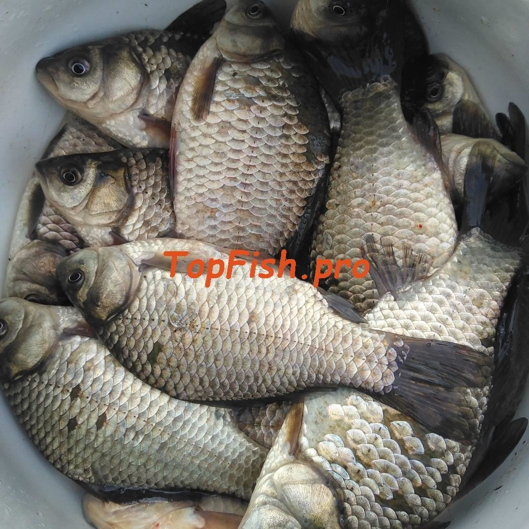 как купить активатор клева fishhungry