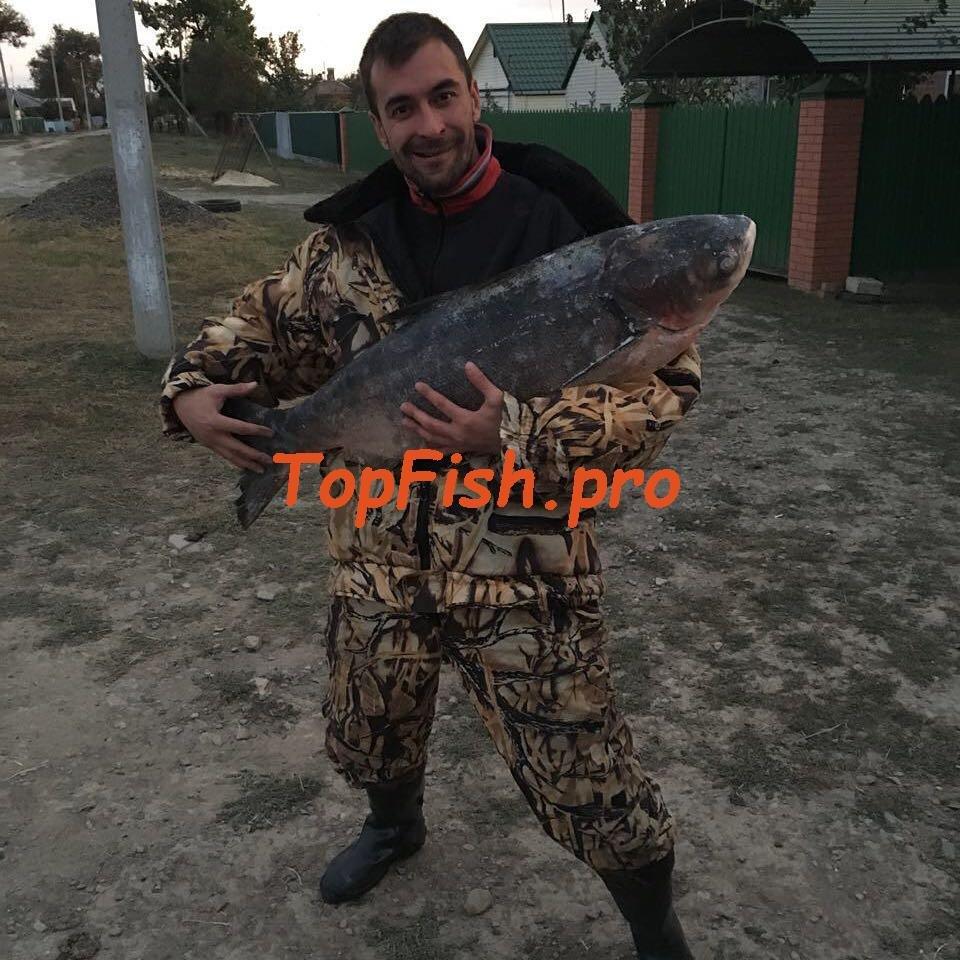 купить fishhungry в воронеже