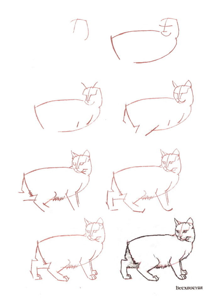 Поэтапный рисунок кошки картинки