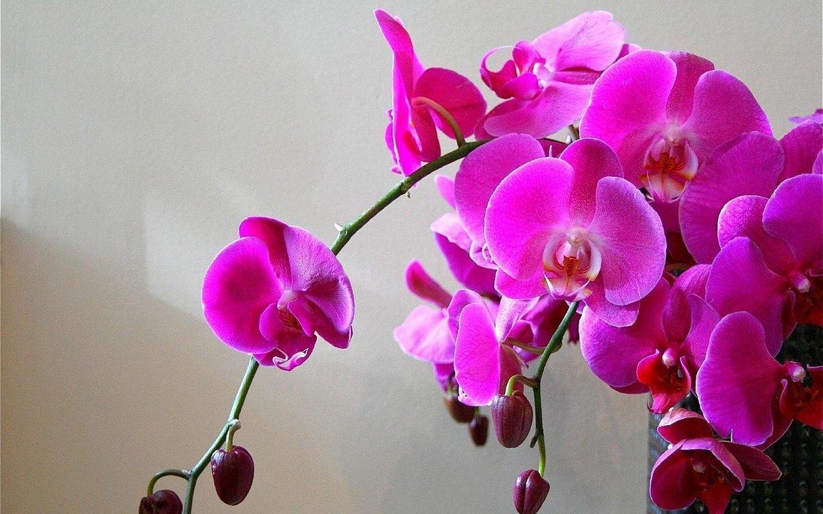 Красота смешные, картинки с орхидеями красивые